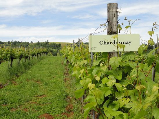 670px-sokol_blosser_chardonnay_vines