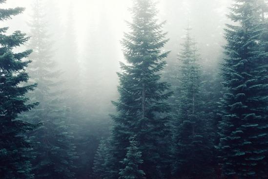fir-trees-569028_960_720