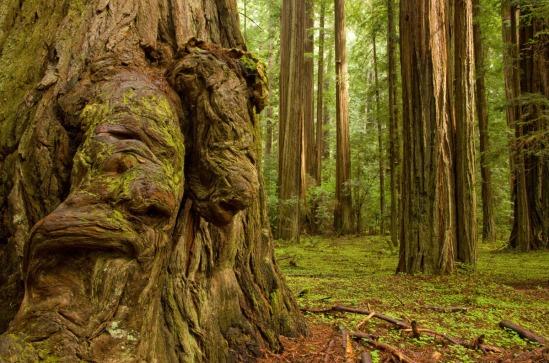 humboldt-redwood-state-park