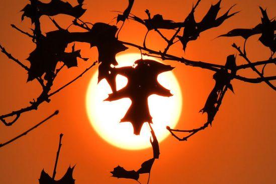 FRANCE - AUTUMN - SUNSET - OAK TREE